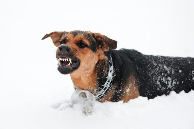 Animal injury claims